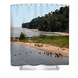 Shower Curtain featuring the photograph Ducks In A Row by Joanne Coyle
