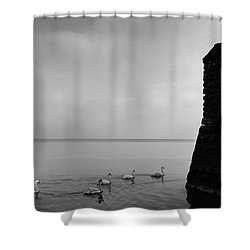 Ducks In Lake Garda, Italy Shower Curtain