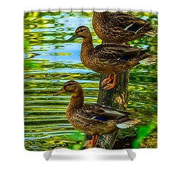 Ducks On A Log 3 Shower Curtain