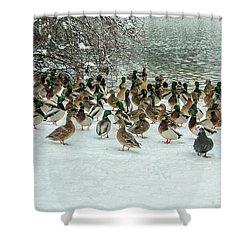 Ducks Pond In Winter Shower Curtain