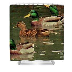 Ducks Race Shower Curtain