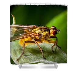 Dung Fly On Leaf Shower Curtain