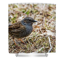 Dunnock Shower Curtain by Torbjorn Swenelius