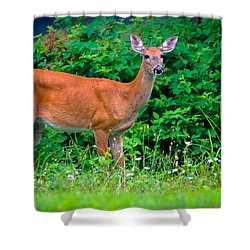 Dusk Deer Shower Curtain