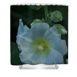 Dust Shower Curtain