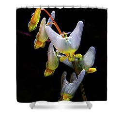 Dutchmans Breeches Shower Curtain