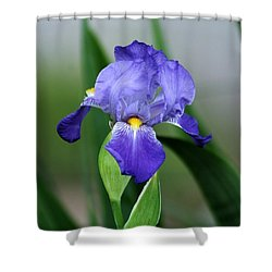 Dwarf Iris 9834_2 Shower Curtain