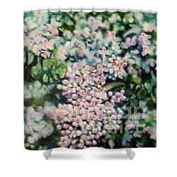 Dwarf Korean Lilac Shower Curtain by Karen Sloan