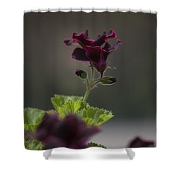 Dying Embers Shower Curtain