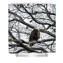 Eagel 0 Shower Curtain