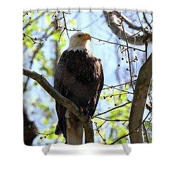 Eagle 1 Shower Curtain