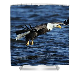 Shower Curtain featuring the photograph Eagle And Pelican by Coby Cooper