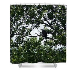 Shower Curtain featuring the photograph Eagle At Codorus by Donald C Morgan