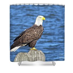Eagle At East Point  Shower Curtain