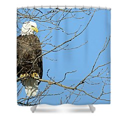 Eagle Shower Curtain by Brook Burling
