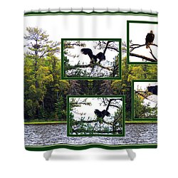 Shower Curtain featuring the photograph Eagle Collage by Teresa Schomig