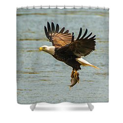 Eagle Departing With Prize Close-up Shower Curtain