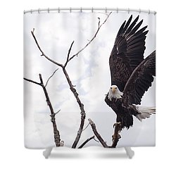Eagle Shower Curtain by Everet Regal