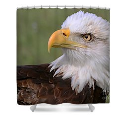Shower Curtain featuring the photograph Eagle Eye by Myrna Bradshaw