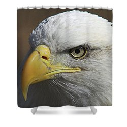 Shower Curtain featuring the photograph Eagle Eye by Steve Stuller