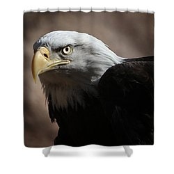 Eagle Eyed Shower Curtain by Marie Leslie