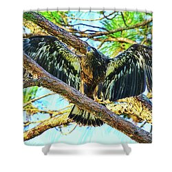 Shower Curtain featuring the photograph Eagle Fledgling II 2017 by Deborah Benoit