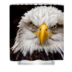 Defiant And Resolute - Bald Eagle Shower Curtain by Rikk Flohr