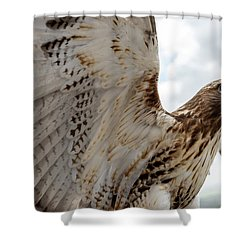 Eagle Going Hunting Shower Curtain