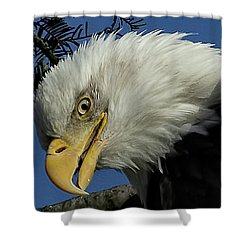 Eagle Head Shower Curtain