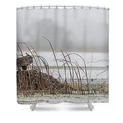 Eagle Hunts For Coots And Ducks Shower Curtain