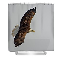 Eagle In Flight Shower Curtain