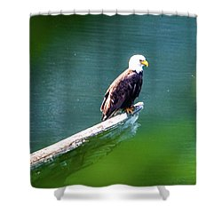 Eagle In Lake Shower Curtain