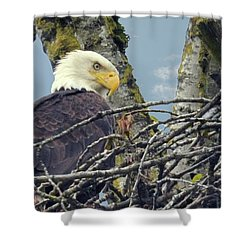Shower Curtain featuring the photograph Eagle In Nest by Rod Wiens