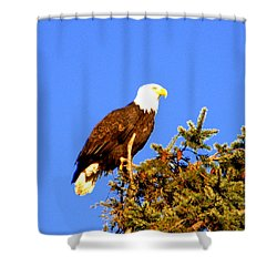 Shower Curtain featuring the photograph Eagle by Jerry Cahill