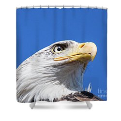 Shower Curtain featuring the photograph Eagle by Jim  Hatch
