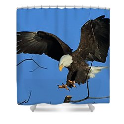 Shower Curtain featuring the photograph Eagle Landing by Coby Cooper