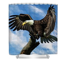 Eagle Landing On A Branch Shower Curtain