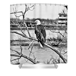 Eagle On The Illinois River Shower Curtain