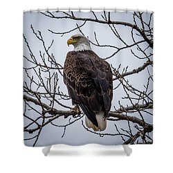 Shower Curtain featuring the photograph Eagle Perched by Paul Freidlund