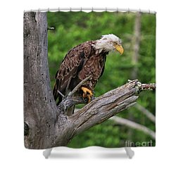 Shower Curtain featuring the photograph Eagle Point Of View by Debbie Stahre