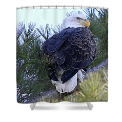 Eagle Portrait Shower Curtain by Brook Burling