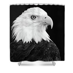 Shower Curtain featuring the photograph Eagle Portrait Special  by Coby Cooper