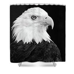 Eagle Portrait Special  Shower Curtain