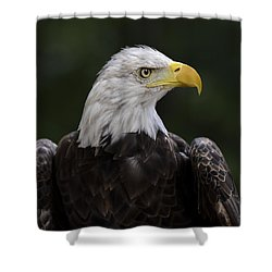 Eagle Profile 2 Shower Curtain