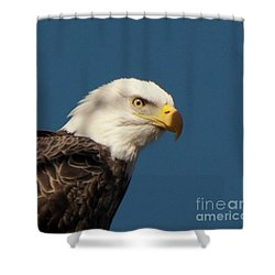 Shower Curtain featuring the photograph Eagle by Rod Wiens
