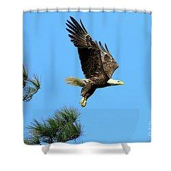 Shower Curtain featuring the photograph Eagle Series 1 2017 by Deborah Benoit