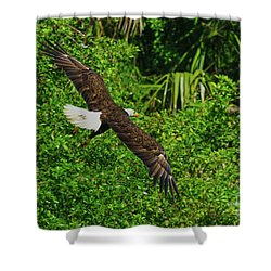 Shower Curtain featuring the photograph Eagle Series Flight by Deborah Benoit