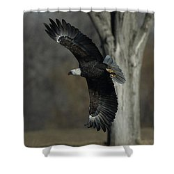 Shower Curtain featuring the photograph Eagle Soaring By Tree by Coby Cooper