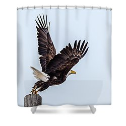 Eagle Taking Flight Shower Curtain