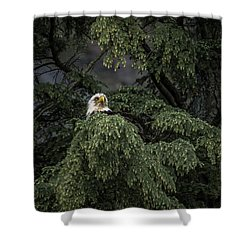 Shower Curtain featuring the photograph Eagle Tree by Timothy Latta